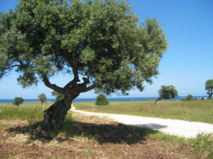paesaggio_riserva_dunecostiere[1]